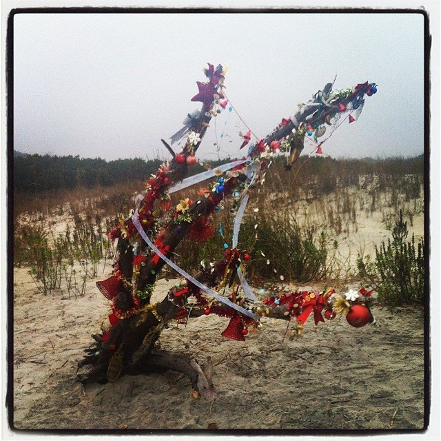 East Beach Christmas Tree December 2013