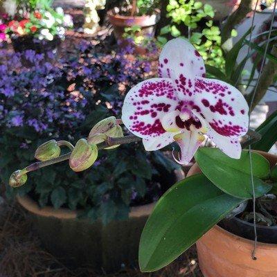 garden walk orchids.jpg