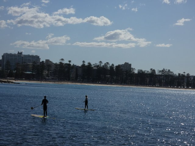 Manly Cove paddlers