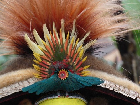 Cassowary Feathers in Headdress