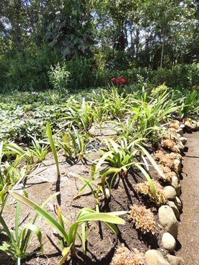 Typical size garden plot to feed family and sell at market