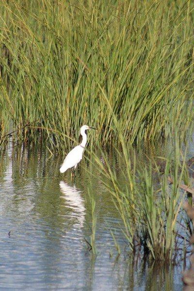 Village Creek Landing Fishing