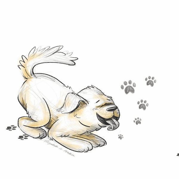 puppy[1] copy.jpg