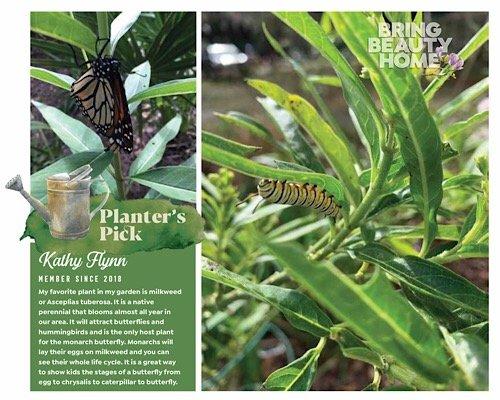 Planter's Pick Kathy Flynn