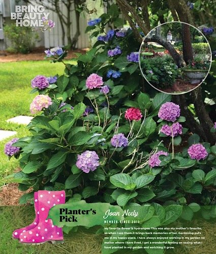 Planter's Pick Joan Neely
