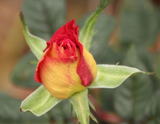 Rose Garden Walk