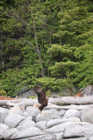 Alaska sm 12001.jpg