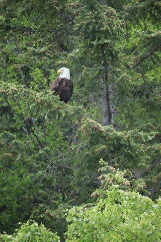 Alaska sm 15001.jpg
