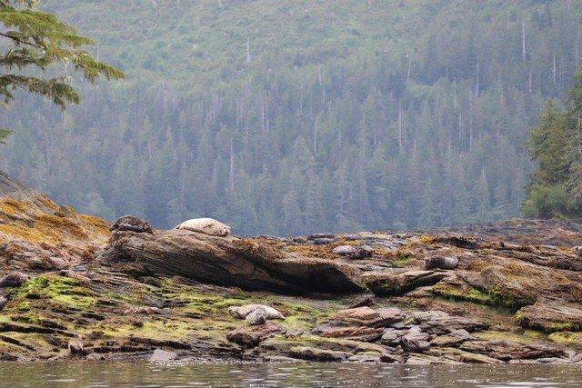 Alaska sm 4001.jpg