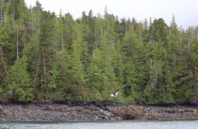 Alaska sm 5001.jpg