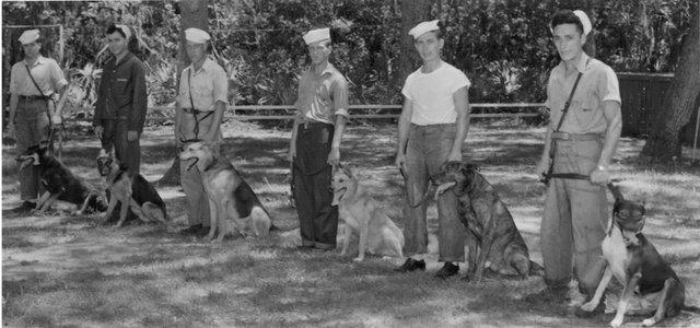 USCG dog patrol SSI CGHS 91.13.196.jpg