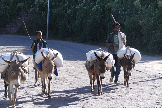 Donkeys carry water and supplies
