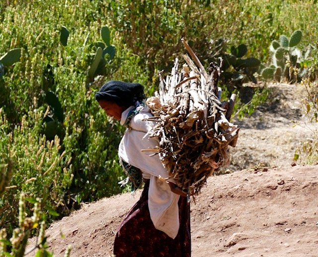 Woman carrying eucalyptus sticks
