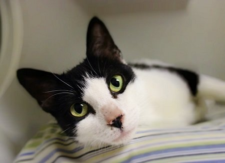May Pet of the Month Walmartha