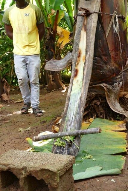 Ground fiber from inside banana bark