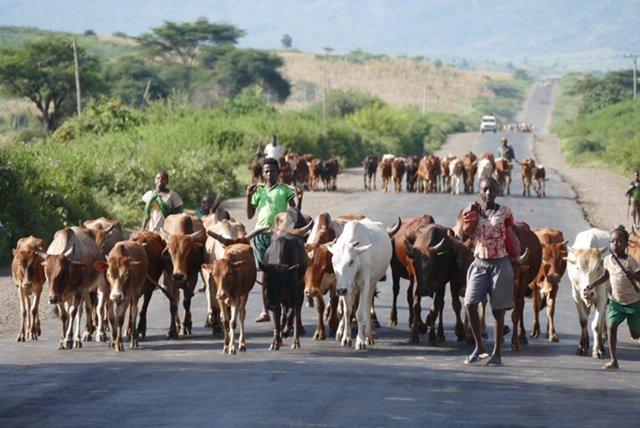 Cattle roadblock