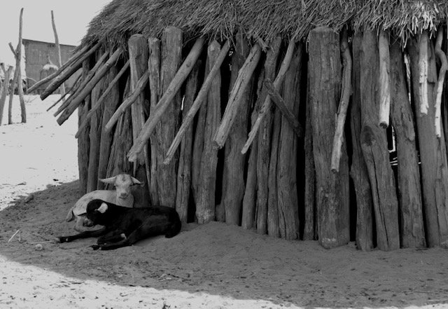 Karo tribe home with animals