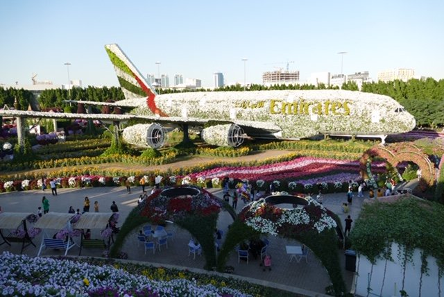 A 747 made out of flowers! Dubai  Miracle Gardens were amazing and a great outdoorsy way to cure jet lag.