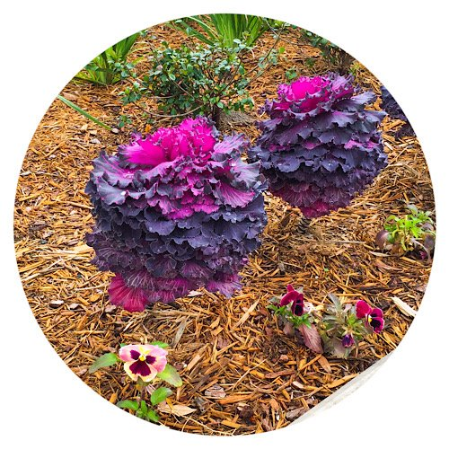 Pier Planter flowers