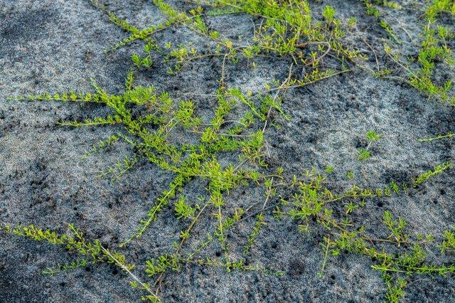 Oatland Soil