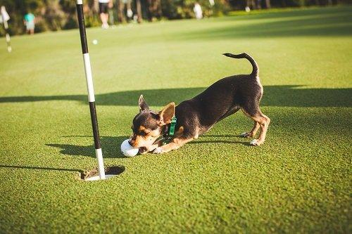 HSSCG Golf Tourney