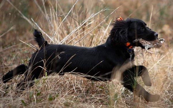Hunt Ball and Pheasant Shoot 2021