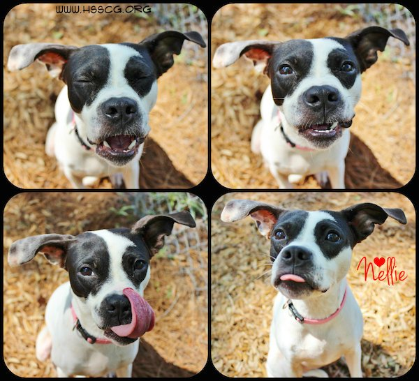 Nellie - HSSCG August Pet of the Month