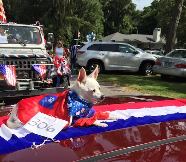 Maxwell Lookin Sharp at the Parade.jpg