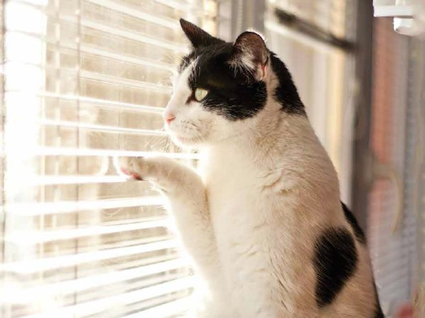 Cat window pic.png