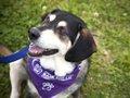 Bark for Life dog.jpg