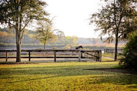 Black Horse in Morning 2.jpg