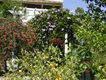Garden Walk Stop 5