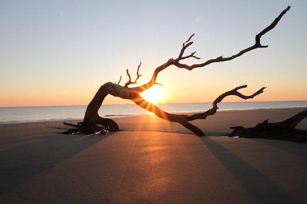 Driftwood Beach Jekyll Island.jpg