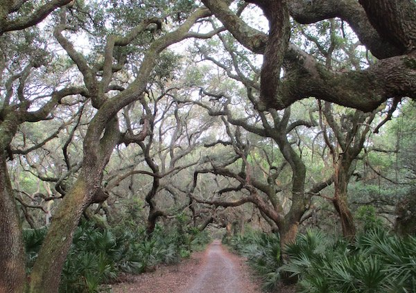 Cumberland trees.jpg