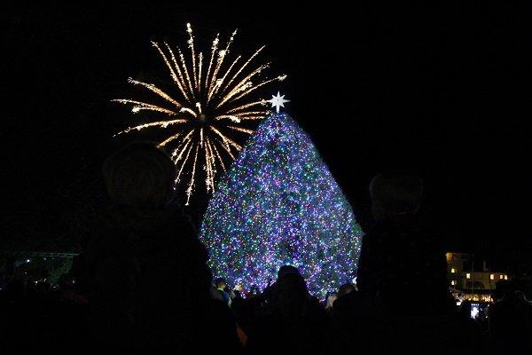 Jekyll tree_fireworks.jpg